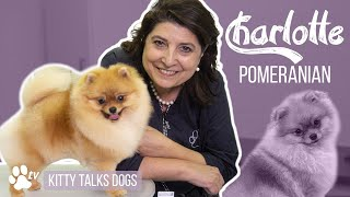 Kitty Talks Dogs: grooming Charlotte the Pomeranian | TRANSGROOM