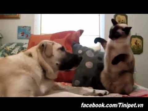 Bụi đời chó mèo