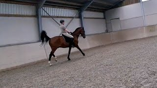 Drive, horse groom and dressage lesson. GoPro FPV!!
