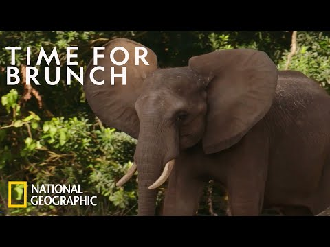 Young Elephants Learn Social Cues | Magic of Disney's Animal Kingdom