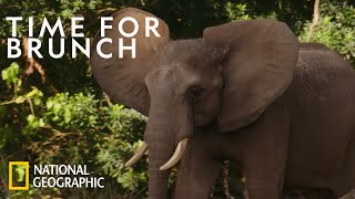 Young Elephants Learn Social Cues | Magic of Disney's Animal Kingdom by Nat Geo WILD