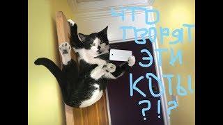 Приколы с котами   самые смешные кошки