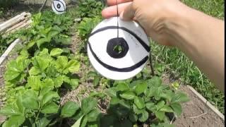 Как защитить клубнику от птиц видео
