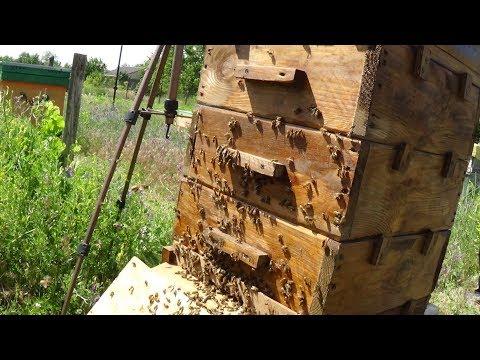 Безсотовое переселение пчелосемьи на пасеке
