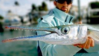 Giant Houndfish, Jacks and Sharks - Inshore Fishing in Florida - ft. Paul Cuffaro