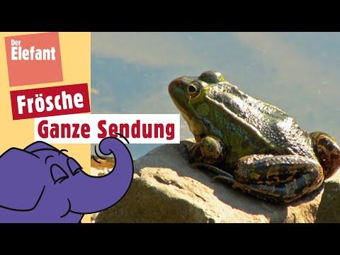 Die Sendung mit dem Elefanten - Frosch | WDR
