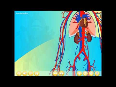 Hipertenzija retinopatija ženklai