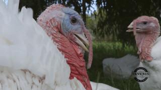 Leadoux Turkeys