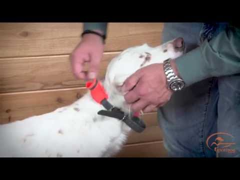 Fitting the Collar of Your SportDOG Brand SD-1875 E-Collar System