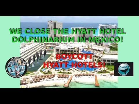 Dolphinarium HYATT HOTEL ZIVA Mexico – Online Campaign
