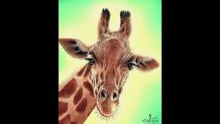 Drawing a giraffe - time lapse