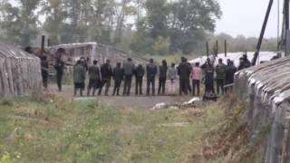 Мигранты в Верх-Туле