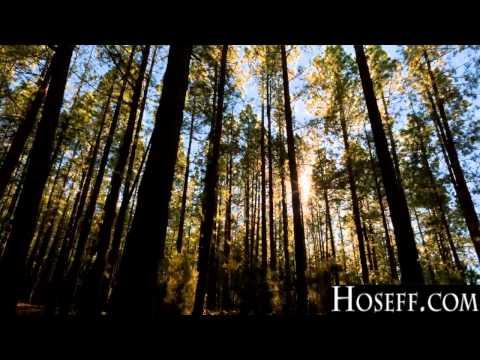 Hoseff - First Desire