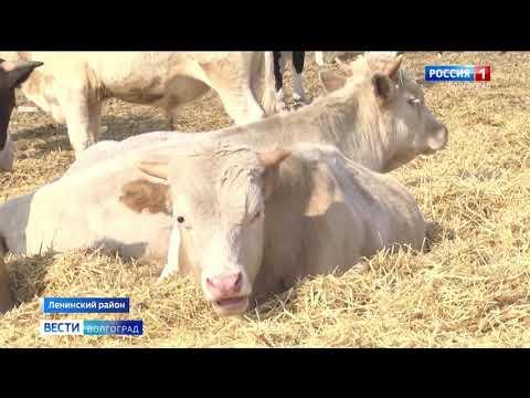 Управлением Россельхознадзора проводится эпизоотический мониторинг в Волгоградской области для предупреждения распространения опасных болезней животных