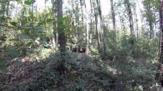 preview picture of video '20141018 Arca Lazio Sezione Funghi - Nemi - lezione all'aperto'