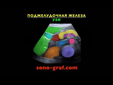 УЗИ - Поджелудочная железа