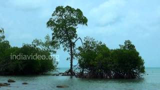 Fishing in Mayabunder, Andaman and Nicobar Islands