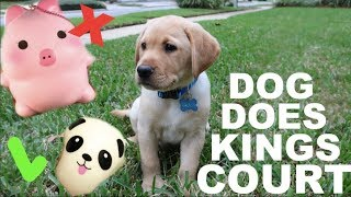 PUPPY CONTROLS KINGS COURT!!! Puppy Reveal