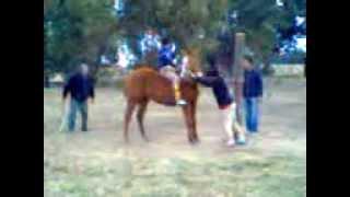 preview picture of video 'probada de caballos'