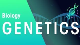 Genetics and Cell Division Keyword Definitions