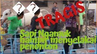 Video TRAGIS DI BAGIAN AKHIR!!! Sapi Ngamuk hampir menyelakai penonton 😱😱😱 MP3, 3GP, MP4, WEBM, AVI, FLV Agustus 2019