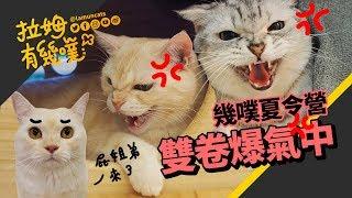 Cat's friends come for summer! (PART I) LAMUNCATS ♧