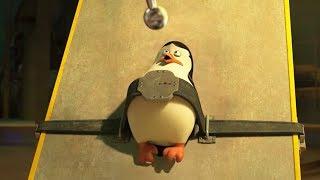 Madagascar En Español Latino   Pingüinos Capturados   Los Pingüinos De Madagascar   Dibujos Animados