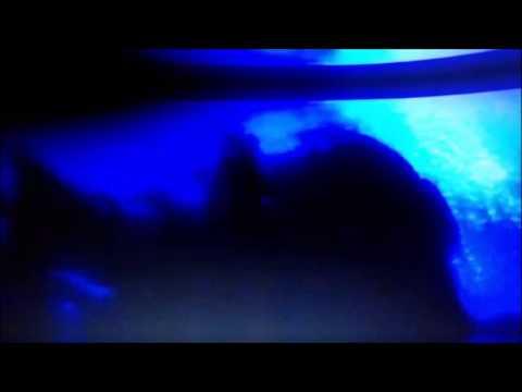 Zenith woman video