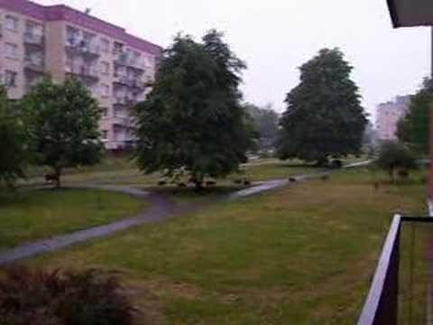 Dziki w Katowicach