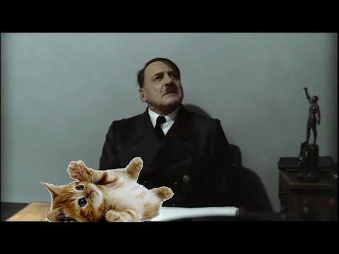 Hitler hankkii kissan :3