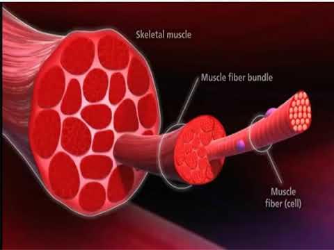 Si la douleur dans les muscles on peut continuer les entraînements