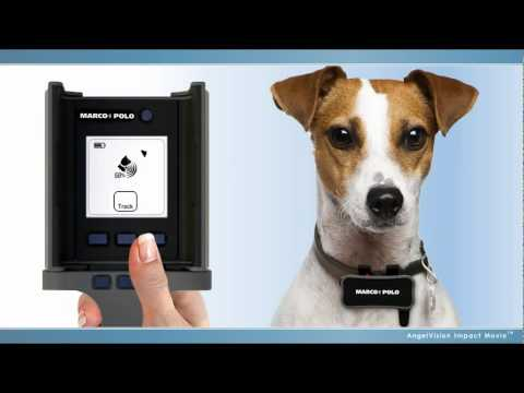 Marco Polo Pet Monitoring, Tracking and Locating System