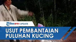 Tim Macan Kalsel akan Usut Tuntas Kasus Pembantaian Puluhan Kucing di Banjarmasin