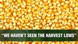 CORN - Boas perspectivas para o milho?
