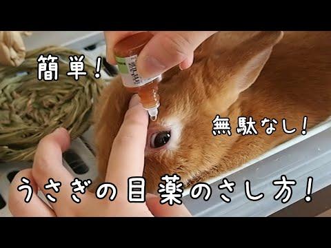 , title : '【うさぎの目薬】目薬を簡単に必ずさせるようになる方法!(教えて!きゃろ先生!)