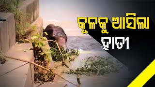 Tusker Trying To Get Out Of Mundali Barrage In Cuttack