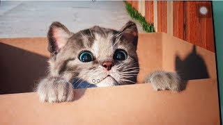 Baby Learn Colours With My Little Kitten | Children  Animation Educational Cartoon Game