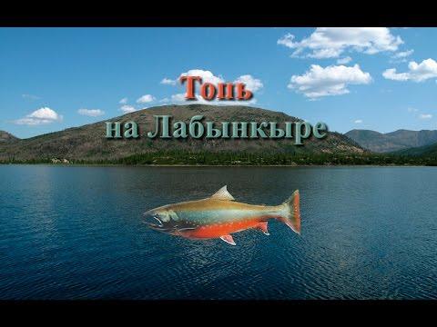 Русская Рыбалка 3.99 Топь на Лабынкыре