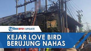 Nekat Kejar Love Bird hingga Panjat Gardu, Tersengat Listrik, Terpental dan Kaki Tersangkut Besi