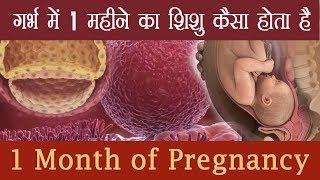 गर्भ में 1 महीने का शिशु कैसा होता है 1st Month Baby Development Process