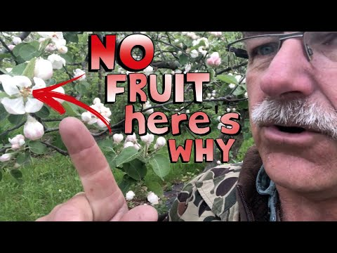 , title : '4 Reasons Why Your Fruit Tree is Not Producing Fruit
