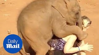 Baby elephant won't let woman go