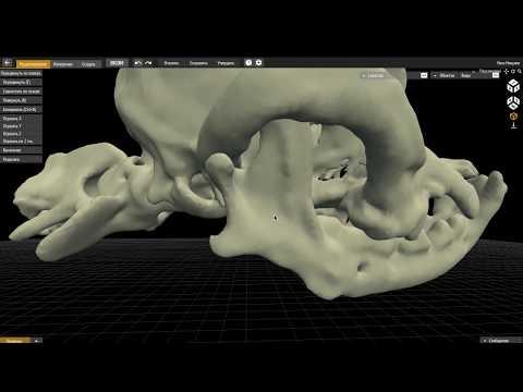 Реконструктивно-восстановительная хирургия нижней челюсти у собак