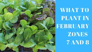 What to Plant in February if you live in Zones 7 and 8