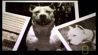 The Science behind the Dogo Argentino
