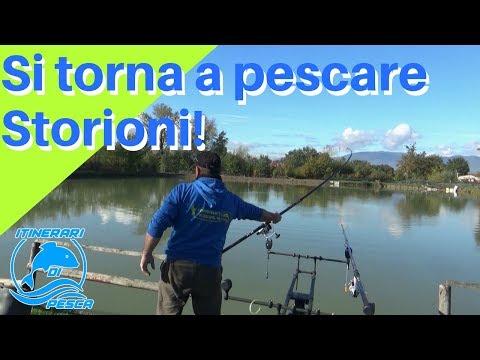 La pesca in Bajkal di chivyrkuyskiya che ha scaricato il video