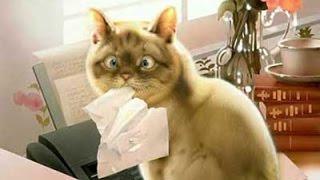 Реакция кота на валерьянку. Cat and Valeriana.
