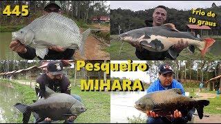 Reabertura do Pesqueiro Mihara - Fishingtur na TV 445