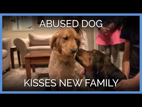 Abused Dog Kisses New Family