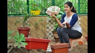 Easy Vegetables You Must Grow in Winters